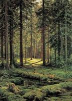 Хвойный лес (И.И. Шишкин)