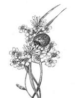 Божья коровка на цветке тысячелистника